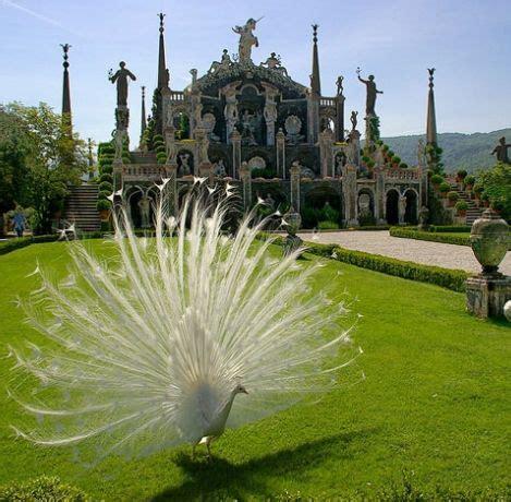 giardini di italia giardini isola stresa verbano cusio ossola