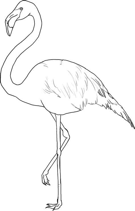 flamingo template flamingo coloring page coloring home