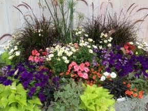 annuals carolyn s shade gardens