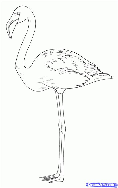 drawing template flamingo easy pencil and in color flamingo easy
