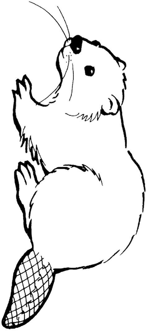 beaver coloring pages preschool printable beaver coloring page sketch coloring page