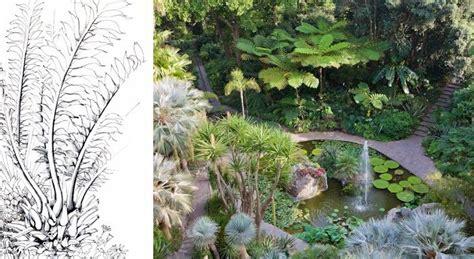 giardini la mortella ischia 17 best images about ischia gardens on dna