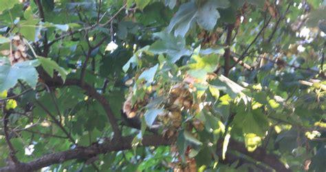 imagenes de semillas varias fotos de varias semillas de 225 rboles y germinaci 243 n