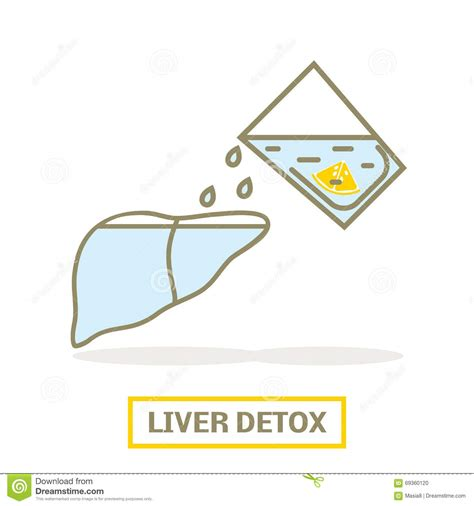 Liver Detox Time by Liver Detox Concept Stock Illustration Image 69360120