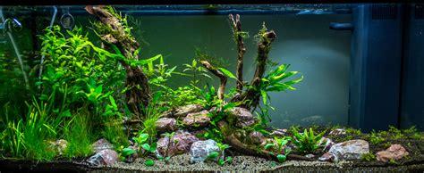 setup aquascape rio 180 first aquascape uk aquatic plant society