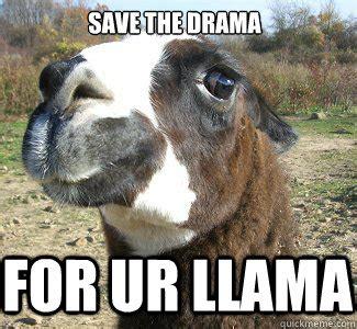 Drama Llama Meme - save the drama for ur llama drama llama quickmeme