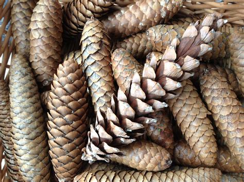 with pine cones simple pine cone centerpiece heartwork organizing tips