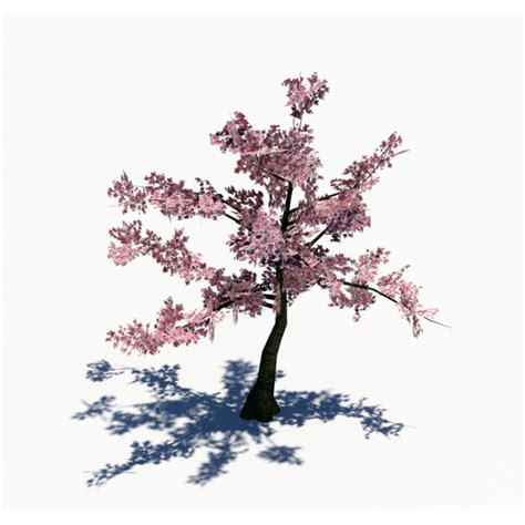 cherry tree 3ds max 3docean lowpoly cherry tree 3d models plants trees 1871402 187 home of cg designers homecg