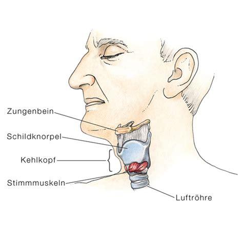 ohr innen geschwollen akute kehlkopfentz 252 ndung akute laryngitis eesom