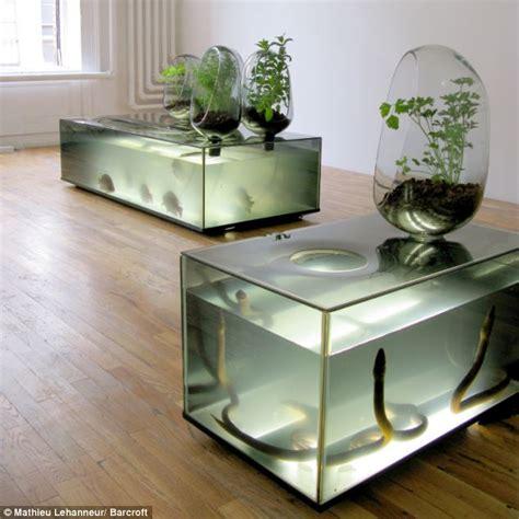 diy ecosystem grow fish  vegetables   living room