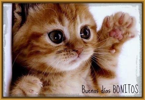 imagenes de buenos dias amor con gatitos perfectas imagenes de buenos dias con gatitos gatitos