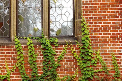 Wonderful Apartment Gardens #8: Windows-217255_960_720.jpg