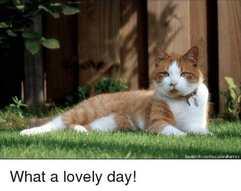 facebook comhesselandhannes   lovely day facebook
