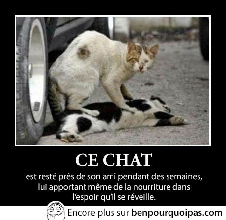 404378 un chat pour la vie amitie feline pour la vie ben pourquoi pas