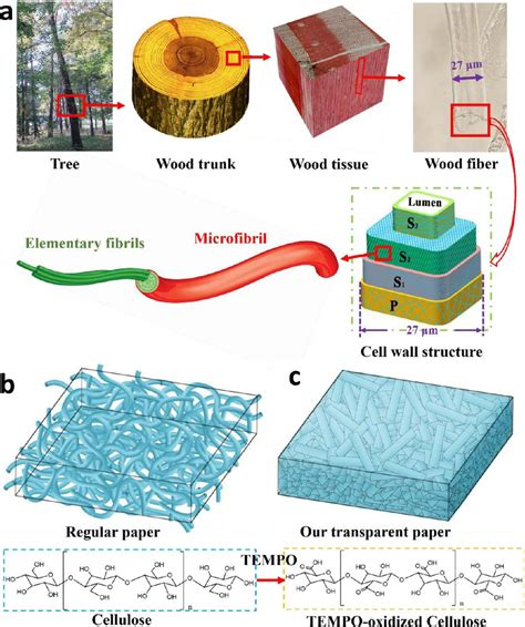 How To Make Paper From Wood - future solar cells may be made of wood
