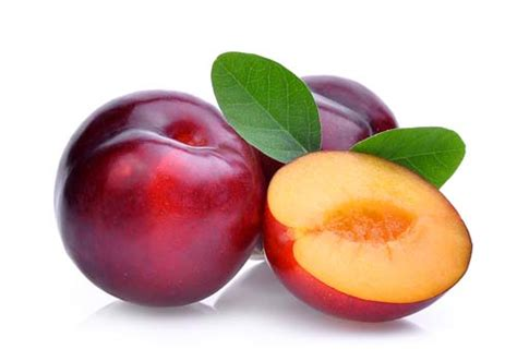 can dogs plums can dogs eat plums or are plums bad for dogs to consume