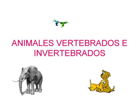 imagenes de animales bertebrados animales vertebrados invertebrados