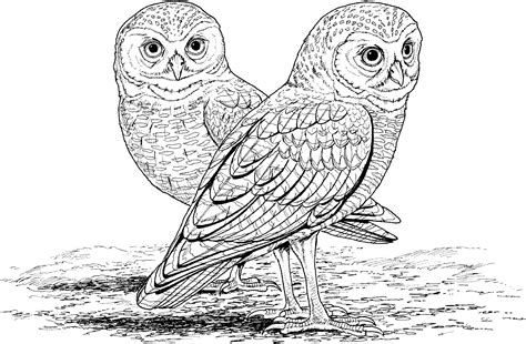 Free Printable Owl Coloring Pages For Kids Owls Coloring Pages