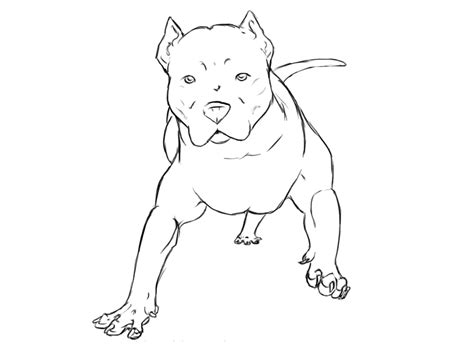 free coloring pages of pitbull dog pitbull dog