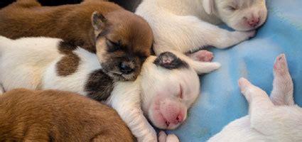 how do puppies sleep at how do puppies sleep