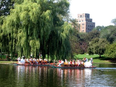 swan boats new york 17 best images about painting inspiration on pinterest