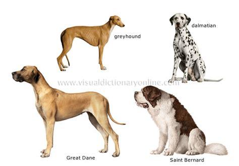 species canine animal kingdom carnivorous mammals breeds 2 image visual dictionary