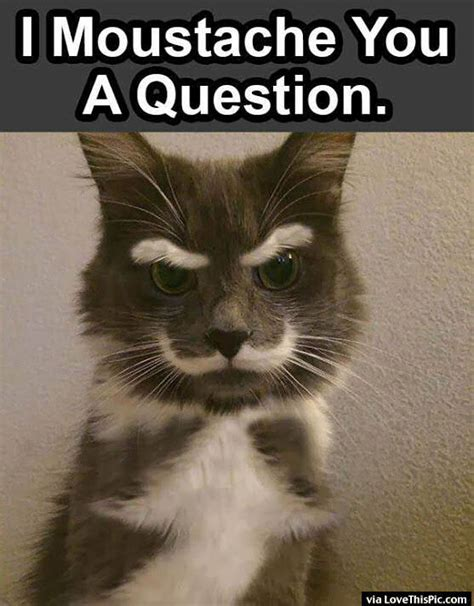 i moustache you a question pictures photos and images