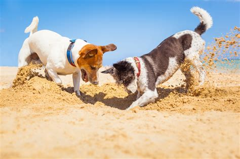 puppy digging dogs digging a great exercise yes