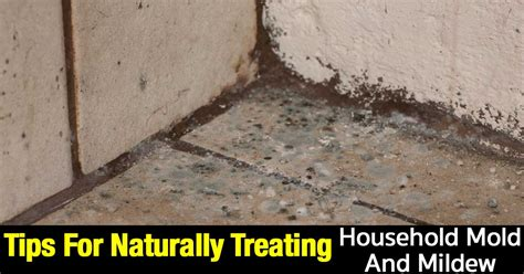 tips  naturally treating household mold  mildew