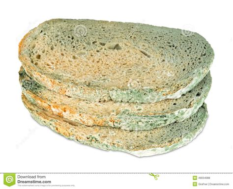 moldy bread slices stock photo image of process isolated