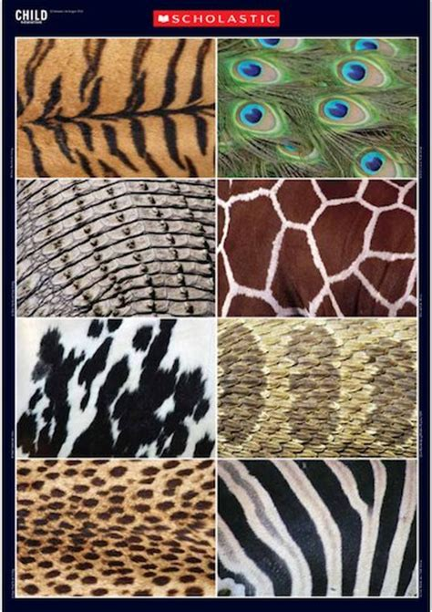 teaching pattern in art ks1 animal patterns primary ks1 teaching resource scholastic