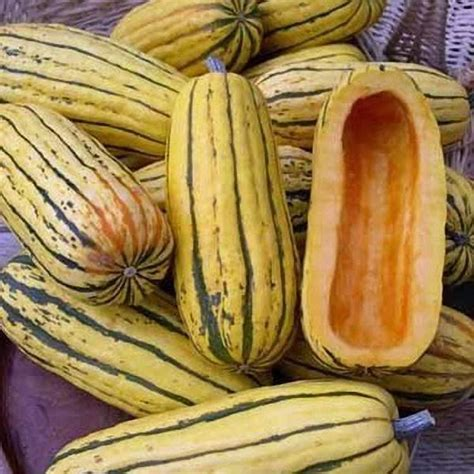 winter squash seeds for sale vegetable garden seeds