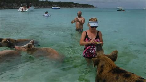 Howard Smith Wanted To Be In Bahamas by 2016 Exuma Bimini Pigs Iguanas And Dolphins
