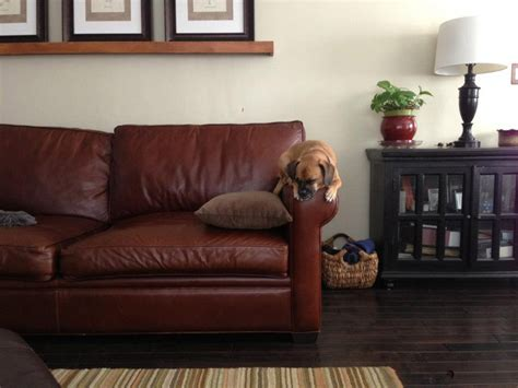 pet friendly leather sofa how to a pet friendly home that s also chic and stylish