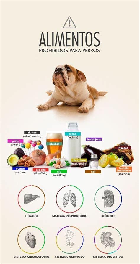 alimentos mascotas alimentos prohibidos para los perros perros mascotas