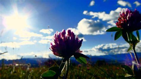 imagenes de flores 3d en uñas 10288 las flores y el atardecer efecto paisajes