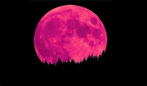pink moon april 2017 pink moon april 2017 pink full moon april 11th 21 176 22 libra cosmic