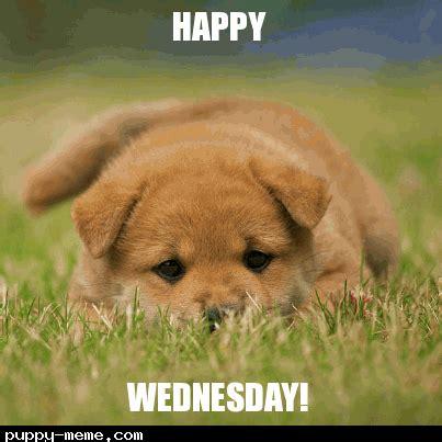 Happy Dog Meme - popular memes of quot wednesday wisdom quot
