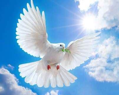 imagenes palomas blancas volando imagenes de palomas blancas cristianas imagui