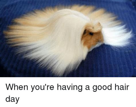 Nice Hair Meme - when you re having a good hair day meme on sizzle