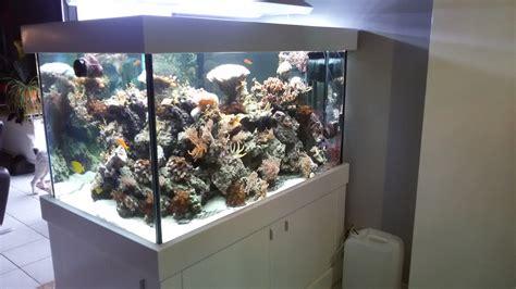 120 liter meerwasseraquarium aquarien und zubeh 246 r tieranzeigen
