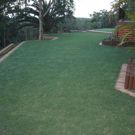 green couch grass new turf laying irrigation sunshine coast north brisbane