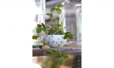 giardini in vaso kusamono i micro giardini in vaso casafacile