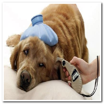 can dogs diabetes can dogs be diabetic bloodsugardiabetes org