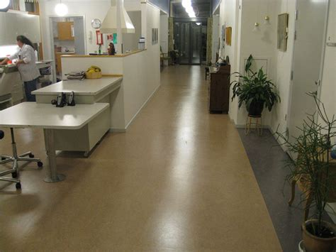 linoleum flooring restoration linoleum floor cleaning