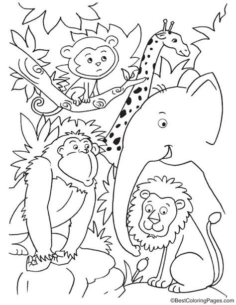 cute jungle animals coloring pages cute jungle animal coloring pages