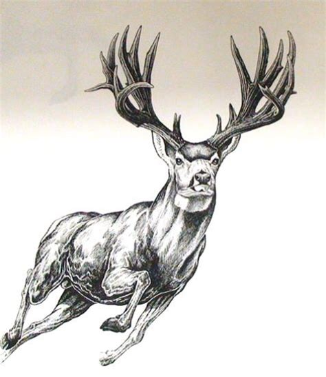 mule deer tattoo designs 1000 images about ideas on mule