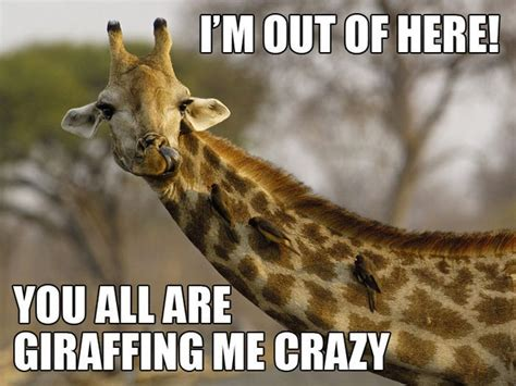 Funny Giraffe Memes - 20 most funniest giraffe meme pictures and photos