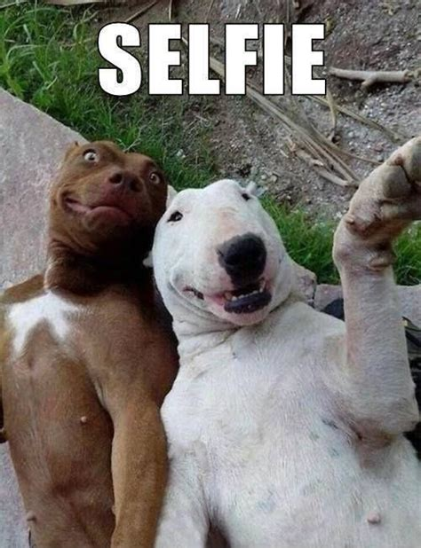 Selfie Meme Funny - selfie quotes selfie sayings selfie picture quotes