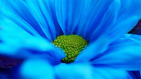 blues image fond d 233 cran fleur bleue